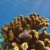 PolarPro Snorkel Filter for Hero5 Black
